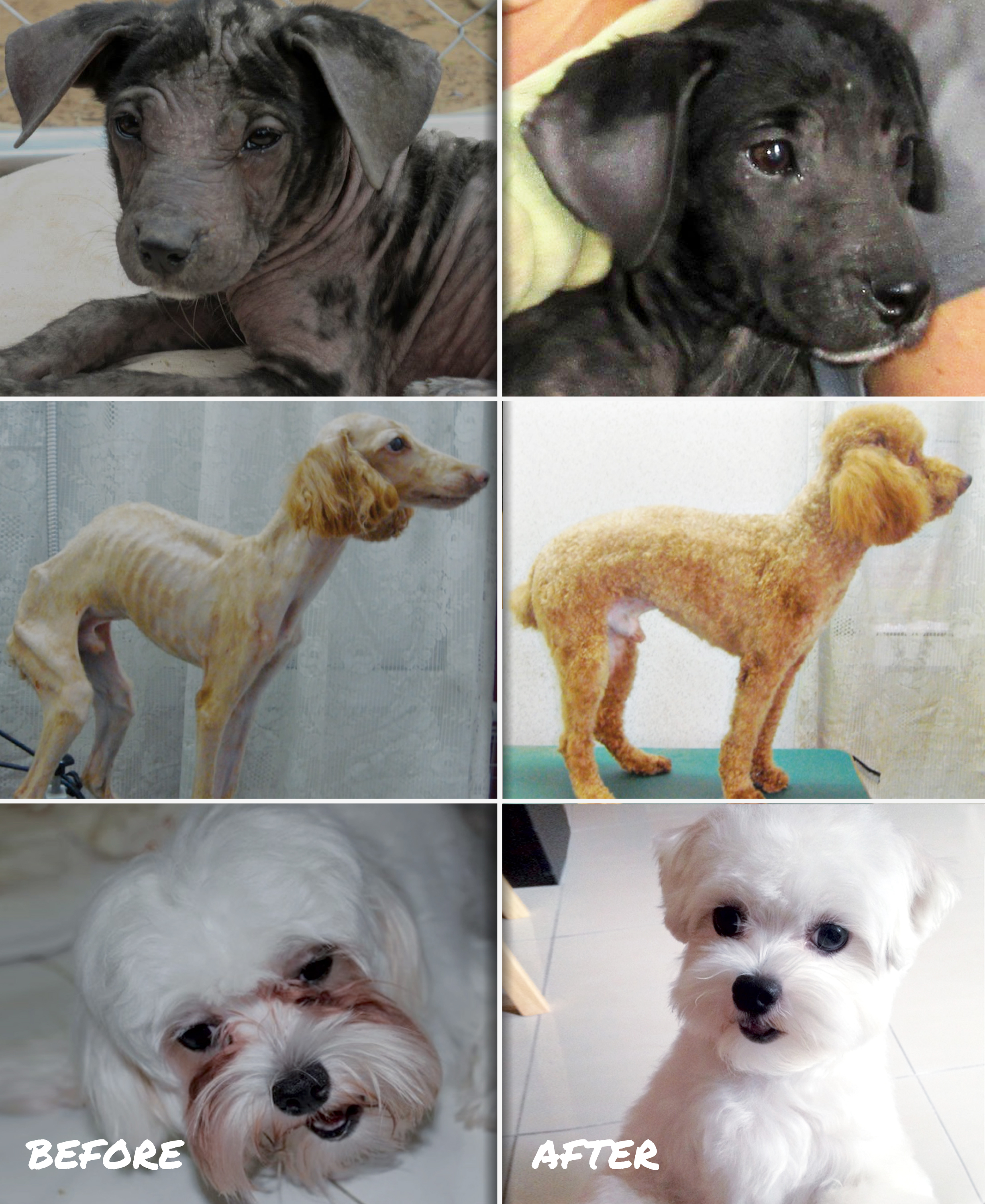 Dogs before and after