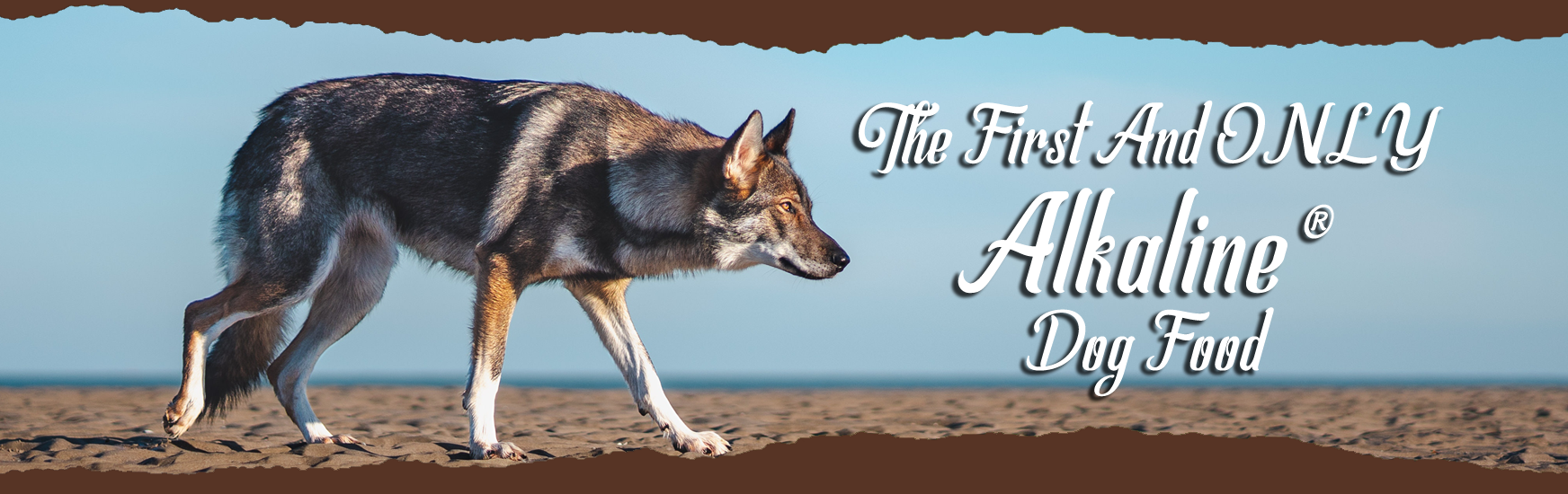The First and Only Alkaline Dog Food